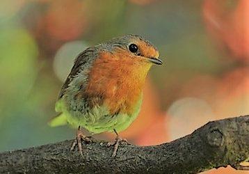A little birdie told me 183Flea is Free